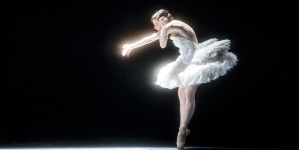 A Swan Returns