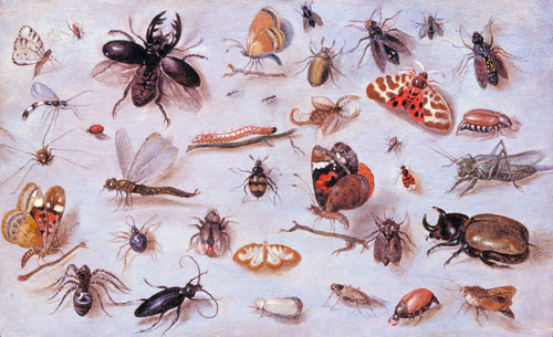 Jan van Kessel, A Study of Butterflies, Moths, Spiders, and Insects, c. 1655. Oil on wood. Sarah Campbell Blaffer Foundation.