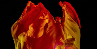 Moving Back to Move Forward: Dancestry Illuminates Modern Dance History