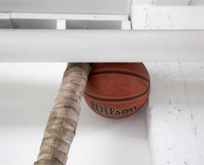 "Liz Rodda, Advantage, detail, 2015. Palm tree trunk, basketball. 105"" tall. Image courtesy the artist."