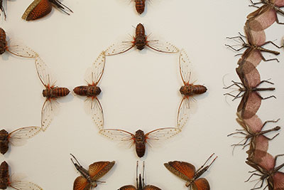 """Detail: Jennifer Angus, Silver Wings and Golden Tales, Insects, Resin, Cloth, 12' x 10' and 13'10"""" x 10' (two walls), 2016."""