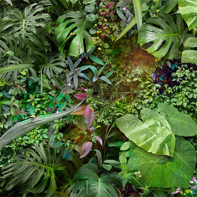 Garden 2015 archival pigment print 43 x 43 inches Edition 1/5